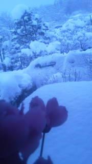 あーあ、雪